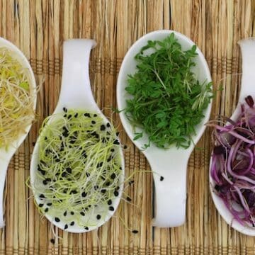 Sprout varieties