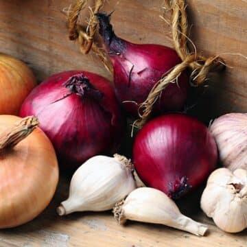 Onion and garlic varieties