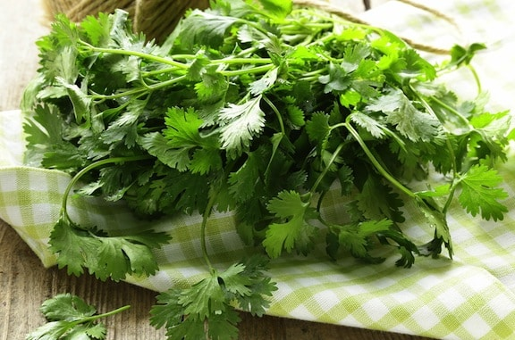 Cilantro on table