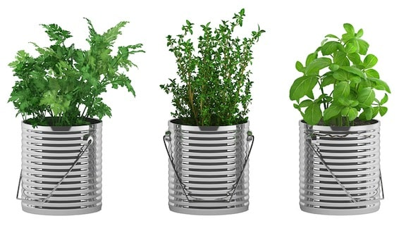 Basil, thyme, and parsley in cans