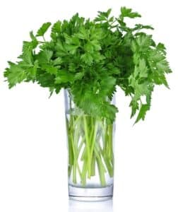 Parsley bunch in a glass