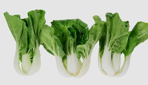 Baby bok choy in a row
