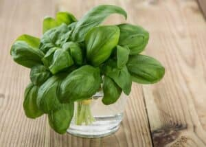Fresh Basil in a glass