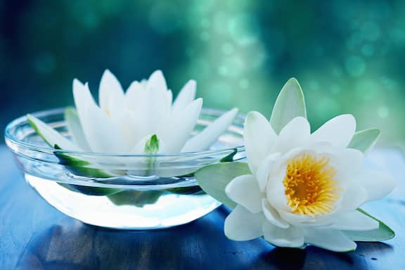 floating white lotus flower
