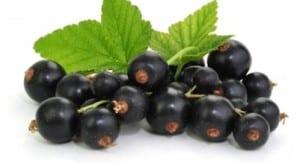 maqui_berry