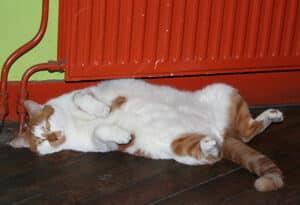 Restaurant De Bolhoed's cat, Sammy