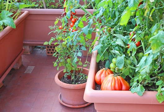 creative tips for starting your own urban garden - Urban Garden