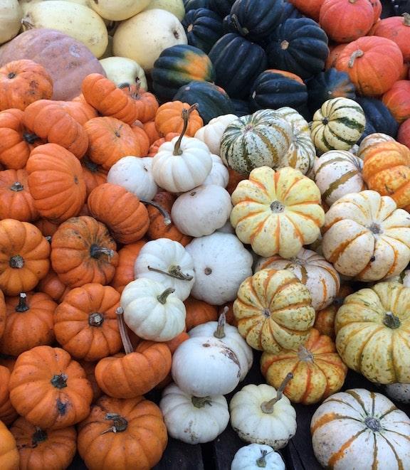 squashes at farm market