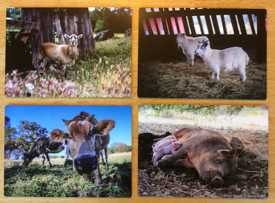 metal barnyard prints from animal place