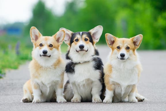 Three cute dogs