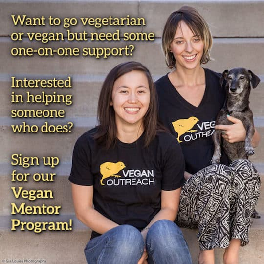 Vegan Outreach mentor program