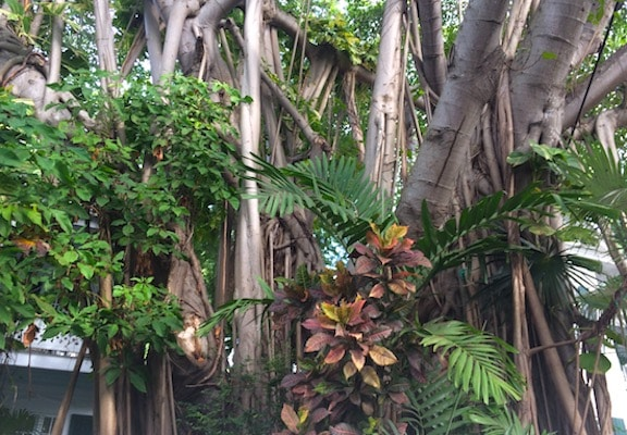 Key West trees